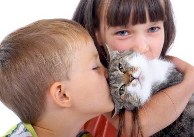 CAT-OWNER